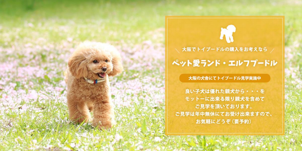 安い ブリーダー 犬