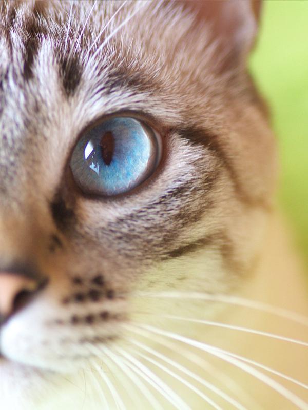 猫カフェでは味わえない、肉球、ひげ、毛の感触、ぬくもり猫好きには堪らない川崎中原区の猫ミュージアム新着ランディングページこのページに付けられているタグ